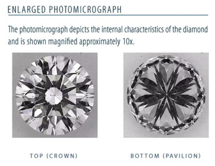 Enlarged Photomicrograph